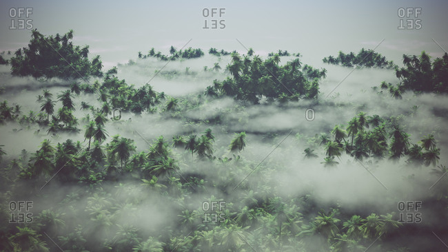 Aerial of rocky landscape with palms in the mist
