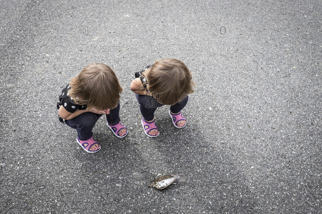 Twin toddlers looking at dead bird