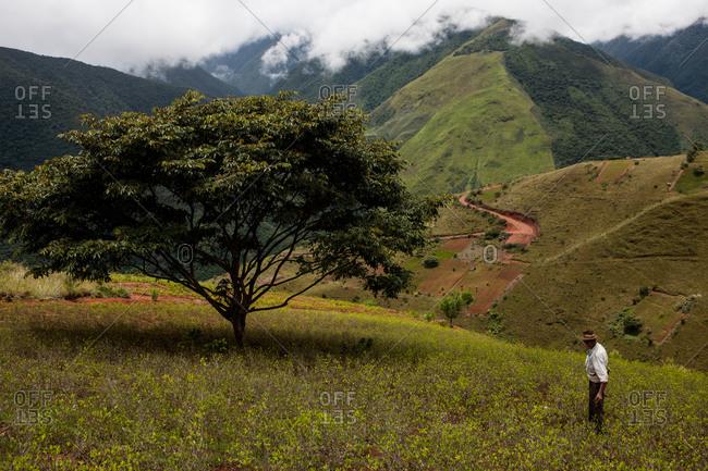 Bolivia - February 22, 2010: Coca plantation