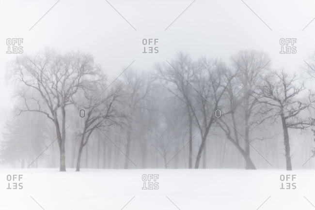 Winter snow and fog in North Dakota forest