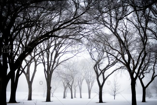 Snow and fog in North Dakota tree grove