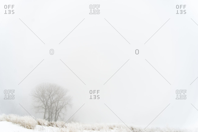 Heavy fog in winter in North Dakota forest