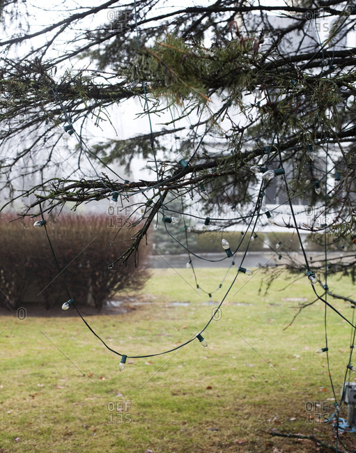 String lights hanging on a tree