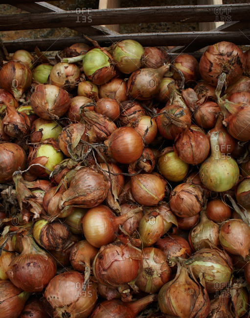 Raw onions in a crate