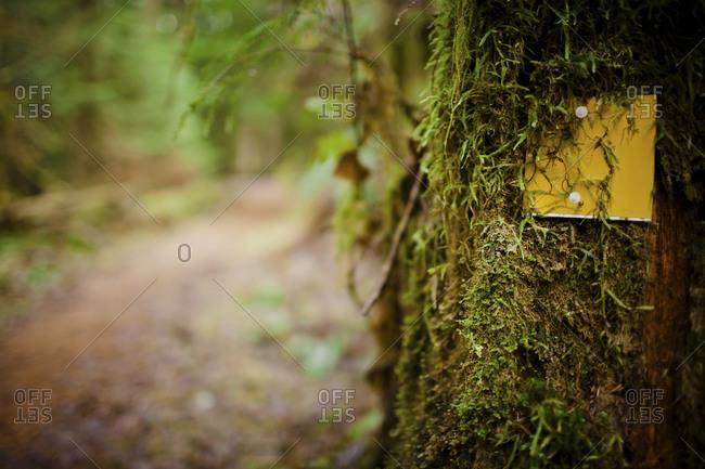 Overgrown trail marker