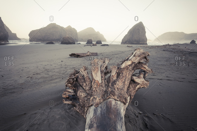 Large log and rootwad at Meyers Creek Beach, Pistol River State Park, Oregon