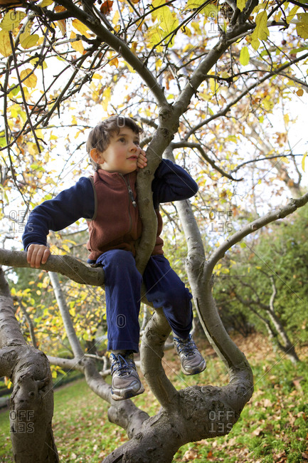 Young boy in apple tree