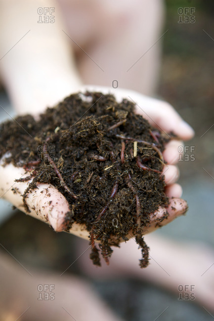 Handful of dirt and worms