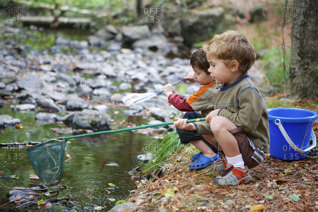 Boys catching frogs in pond