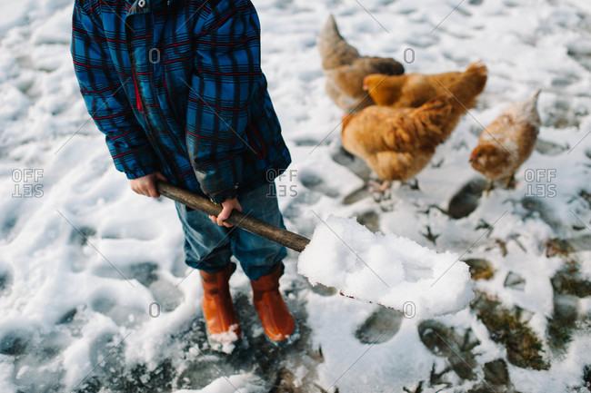 Boy shoveling snow near chickens in yard