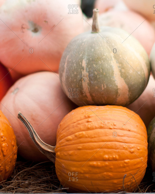 Close up of pumpkins