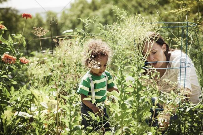 Young boy gardening with her mother