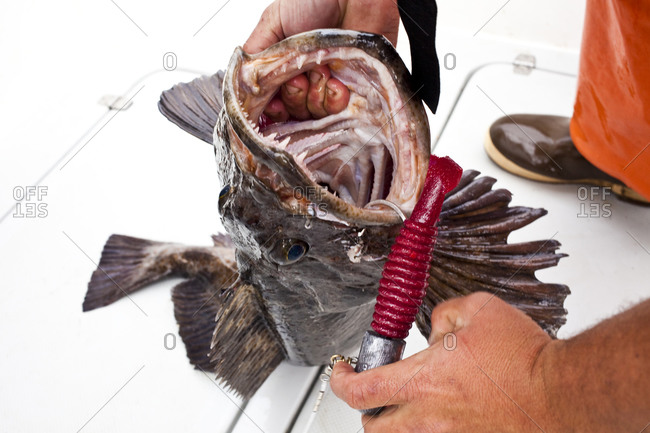 Man weighing largemouth bass