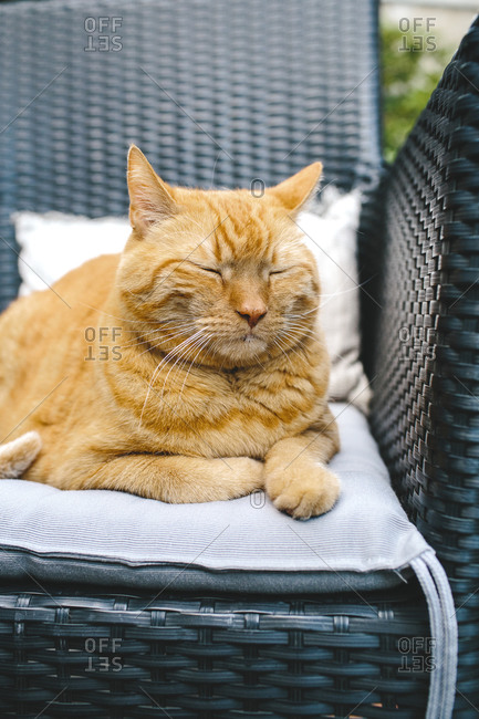 Orange cat resting in garden chair