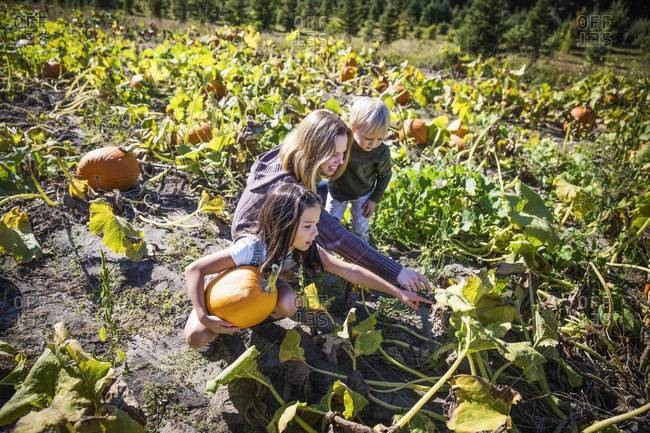 Woman choosing pumpkins for Halloween with her children