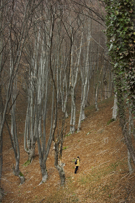 Hiker standing still in beech forest