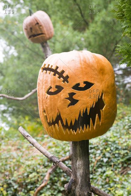 Jack-o'-lantern on a tree trunk