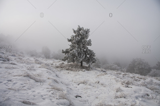 A tree stands alone on a snow covered hill