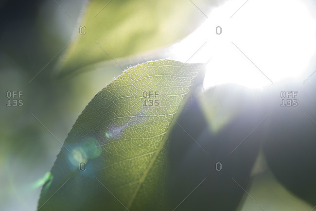 Sunlight shines through leaves