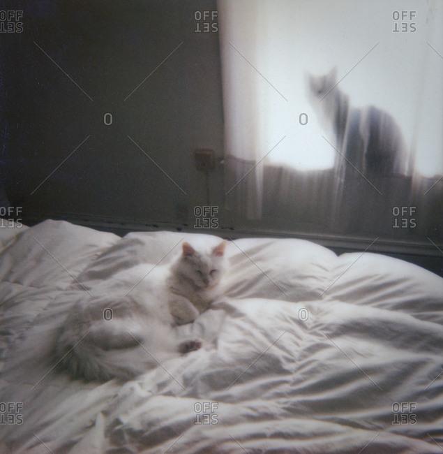 Cats relaxing in bedroom