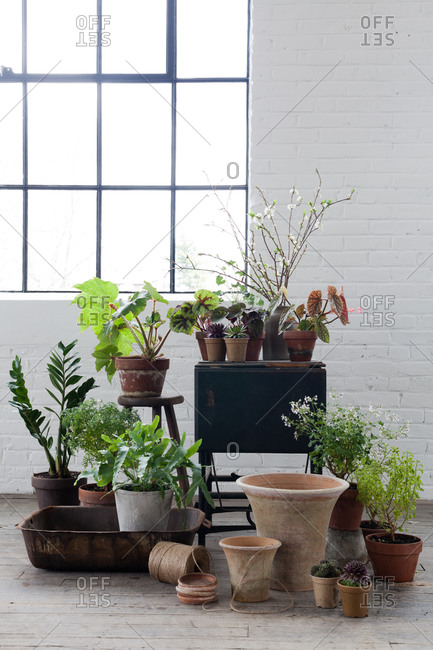 Potted plants in room