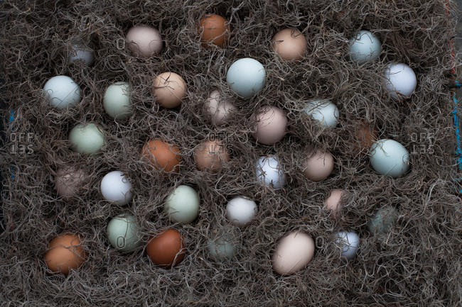 Colorful eggs