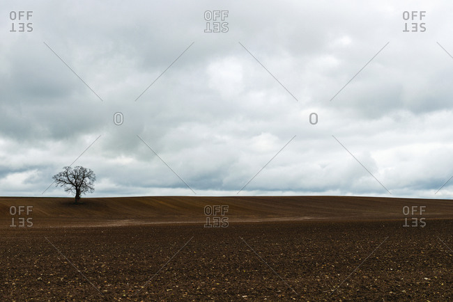 A tree in a freshly ploughed field near Chapelle in the Loire Valley, France