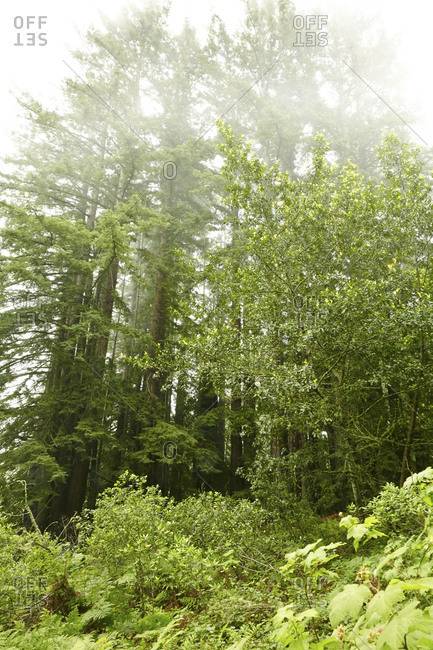 Tall trees in wooded area