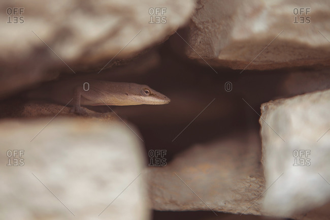Close up of a lizard in a crevice