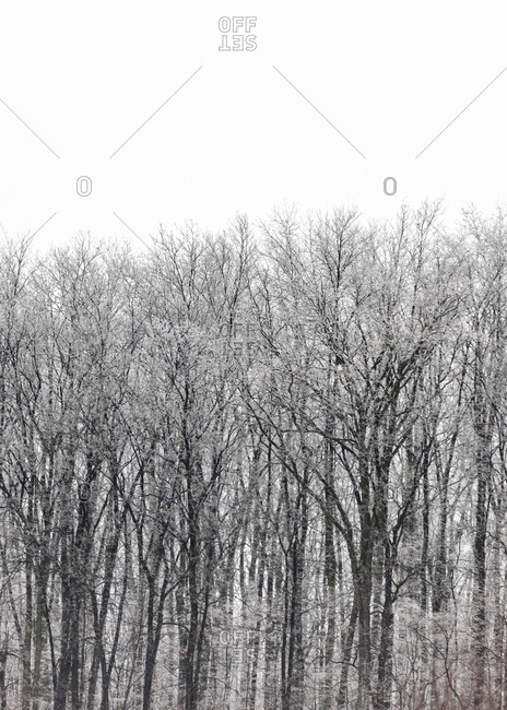 Winter landscape with trees