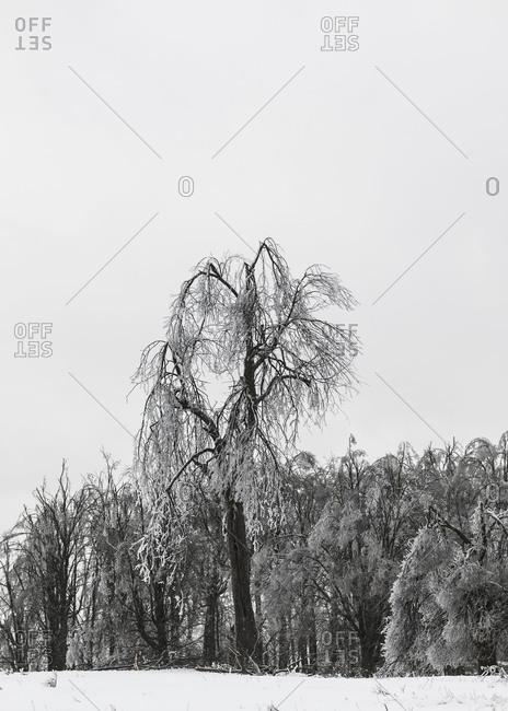 Bare tree standing in winter landscape