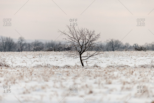 Winter landscape with bare tree in the middle