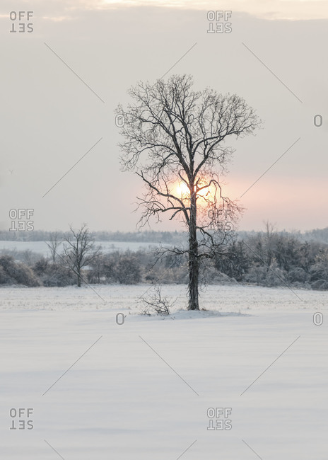Winter landscape in the sunset