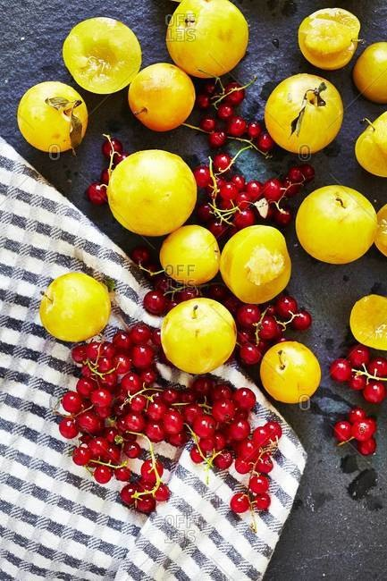 Still life of ripe Mirabelle plums with redcurrant