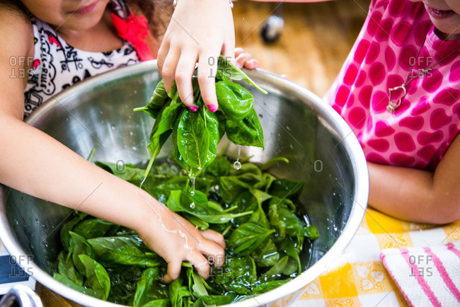 Children washing spinach in a bowl