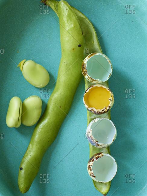 Miniature eggshells on beans - Offset
