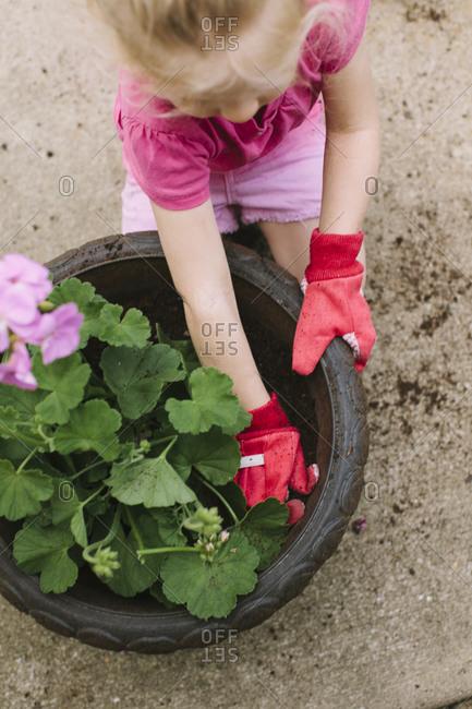 Close up of little girl potting geranium flower
