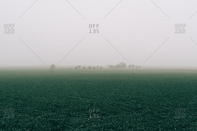 Foggy landscape in Osterlen, Sweden