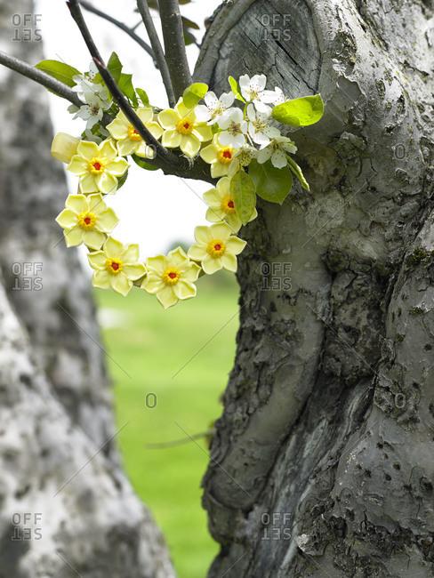 A wreath of Easter cookies hangs in a tree