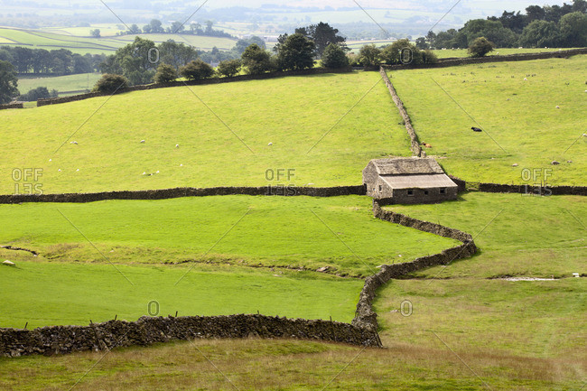 Field Barn and Dry Stone Walls in Crummack Dale