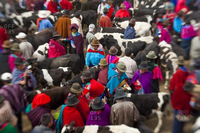 Zumbahua, Ecuador - January 21, 2010: Cattle market in Guamote, Ecuador