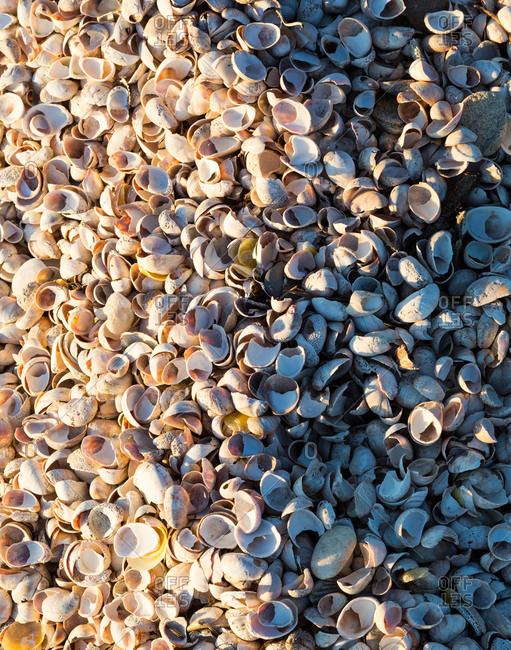 Pile of shells on the beach