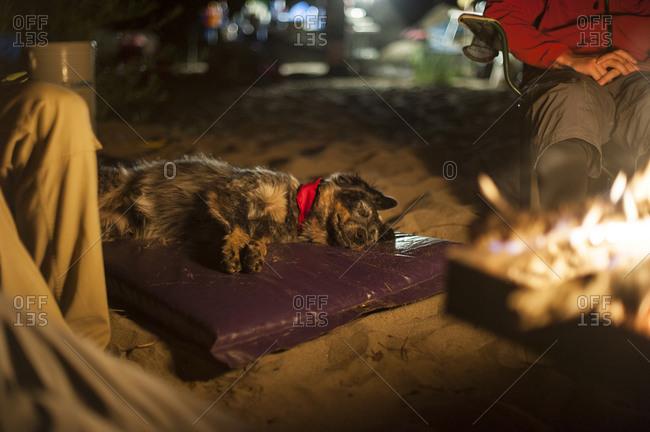 Dog lying next to campfire