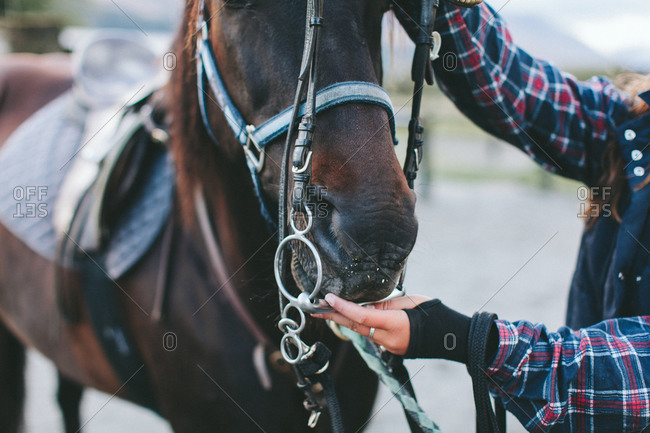 Rider putting bridle on horse
