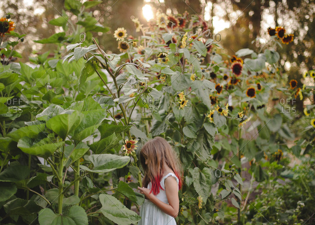 Girl surrounded by sunflowers
