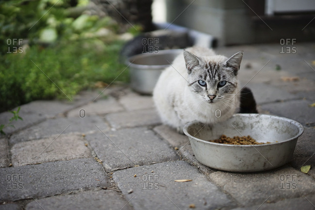 Cat at food bowl on patio