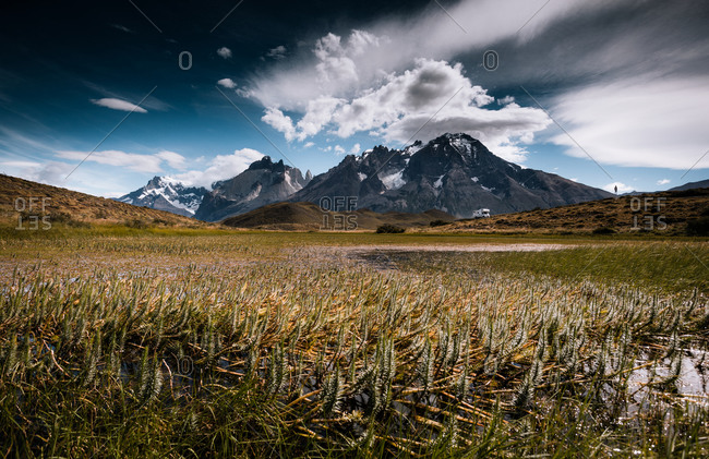 Grasses grow in a swampy field at the base of the Andes