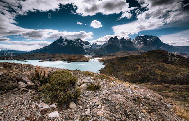 A lone shrub on a hill in front of the Andes mountains