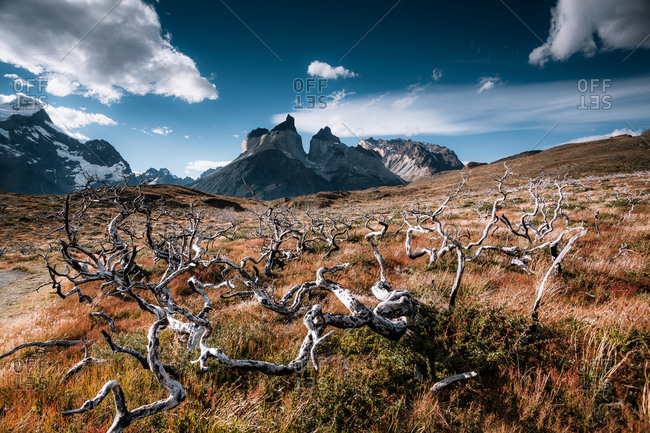 Gnarled branches in front of a mountain range
