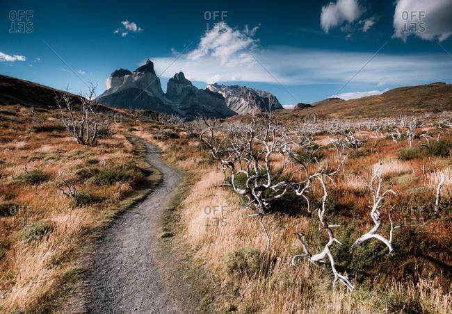 A path through the Argentinean landscape